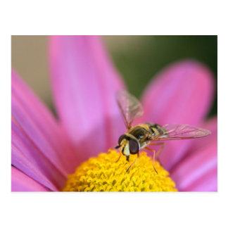 Flor de polinización de la abeja postal