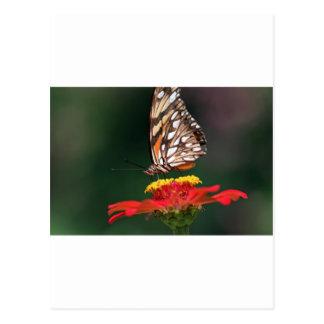 Flor de polinización de la mariposa postal