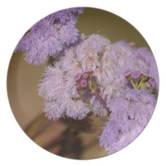 Flor de punta púrpura; Ningún texto Plato De Cena