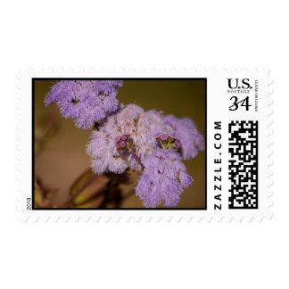 Flor de punta púrpura; Ningún texto Franqueo