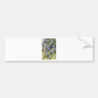 Flor de Rosemary en macro de la primavera Pegatina Para Auto
