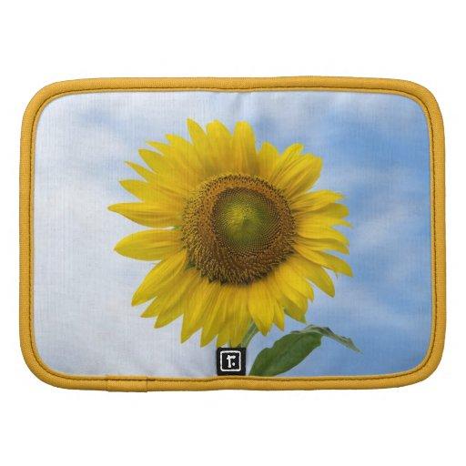 Flor de Sun contra el cielo azul Organizador