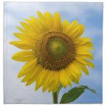Flor de Sun contra el cielo azul Servilletas De Papel