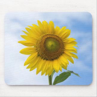 Flor de Sun contra el cielo azul Alfombrillas De Ratones