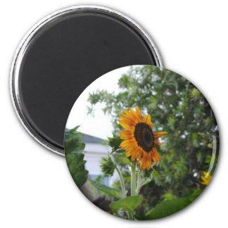 Flor de Sun Imán Redondo 5 Cm