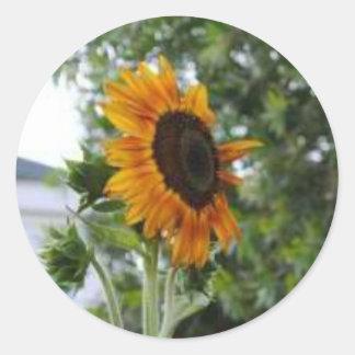 Flor de Sun Pegatinas Redondas