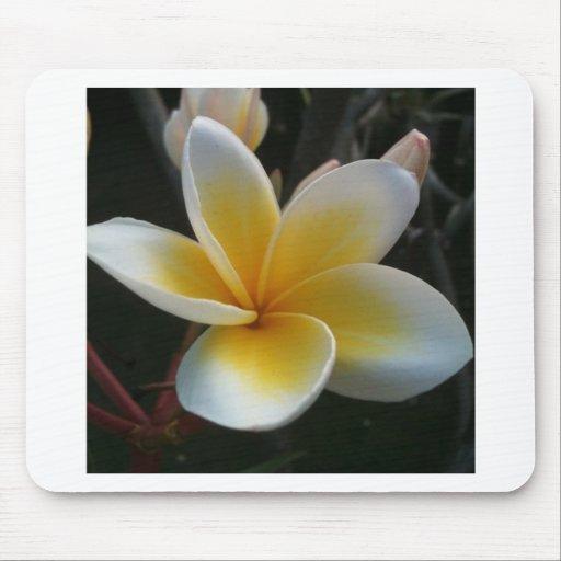 flor de Tailandia Alfombrillas De Ratón