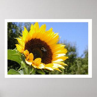 Flor de The Sun Poster
