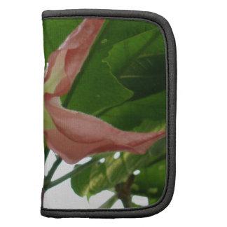 Flor de trompeta rosada (flor de la estrella) organizadores