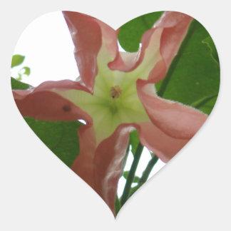 Flor de trompeta rosada (flor de la estrella) pegatina en forma de corazón