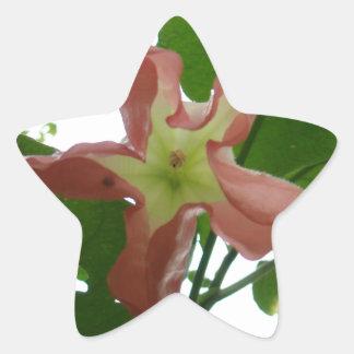 Flor de trompeta rosada (flor de la estrella) pegatina en forma de estrella