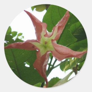Flor de trompeta rosada (flor de la estrella) pegatina redonda