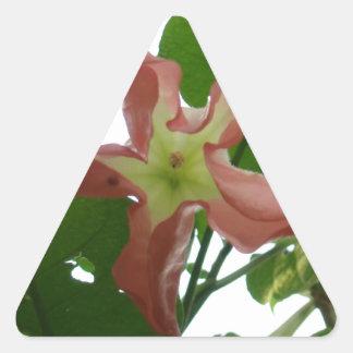 Flor de trompeta rosada (flor de la estrella) pegatina triangular
