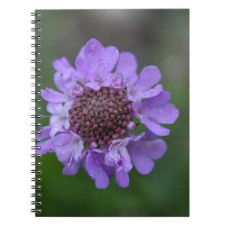 Flor de un lucida de Scabiosa Libro De Apuntes Con Espiral