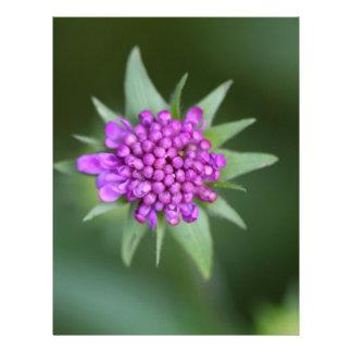 Flor de un lucida de Scabiosa Membretes Personalizados