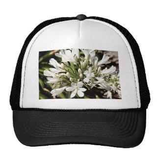 Flor del Agapanthus en la floración Gorro