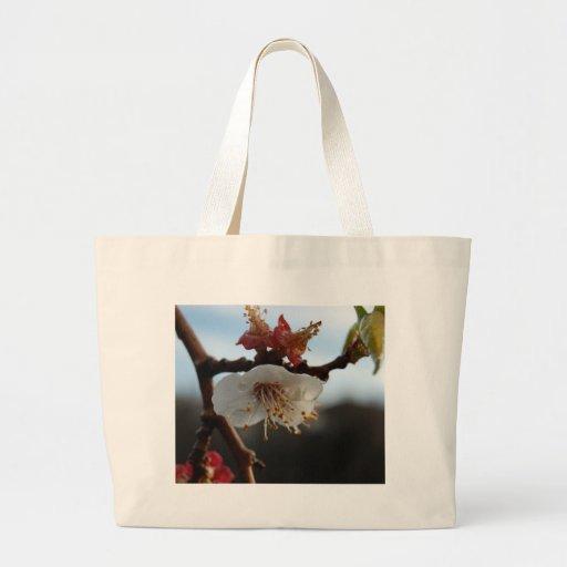 Flor del albaricoque bolsas