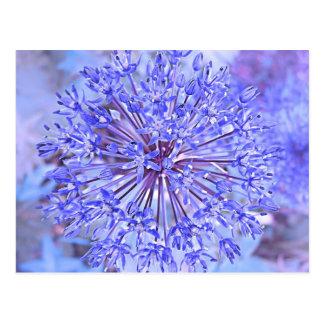 Flor del allium en azul tarjetas postales