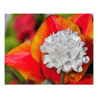 Flor del allium fotografía