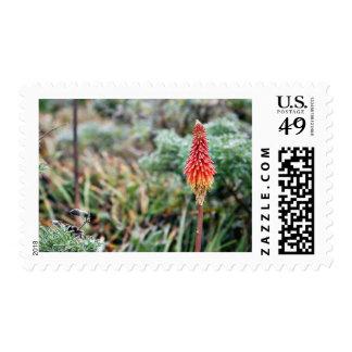 Flor del áloe sellos