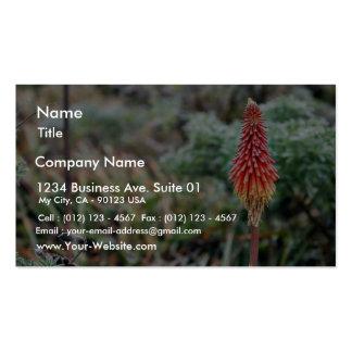 Flor del áloe plantilla de tarjeta personal