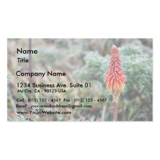 Flor del áloe tarjetas de visita