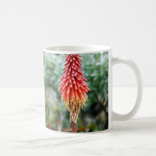 Flor del áloe tazas de café