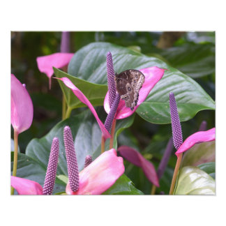 """Flor del Anthurium con la mariposa 20"""""""" foto x16"""