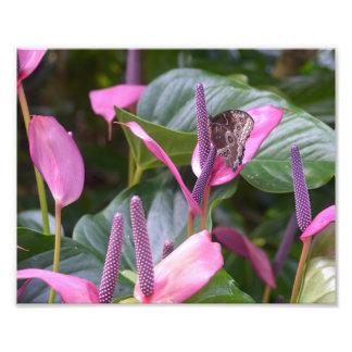 """Flor del Anthurium con la mariposa 8"""""""" foto x10"""