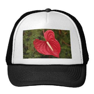 Flor del Anthurium en la floración Gorros Bordados