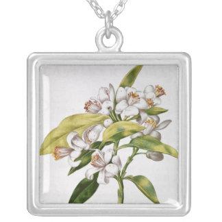 Flor del árbol anaranjado, de 'La Guirlande de Jul Colgante Cuadrado
