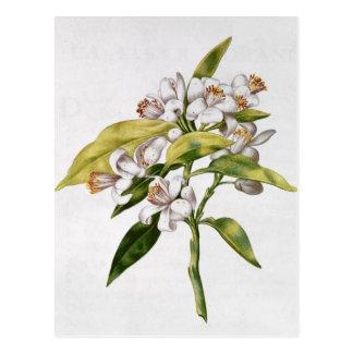 Flor del árbol anaranjado, de 'La Guirlande de Tarjeta Postal