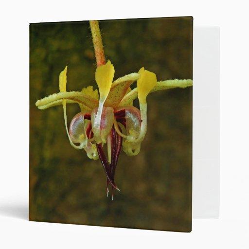Flor del árbol de cacao del Theobroma