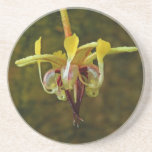 Flor del árbol de cacao del Theobroma Posavasos Personalizados