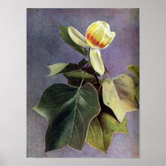 Flor del árbol de tulipán impresiones