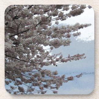 Flor del árbol posavasos