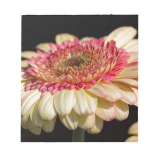 flor del aster en el jardín bloc