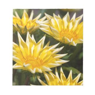 flor del aster en el jardín libretas para notas