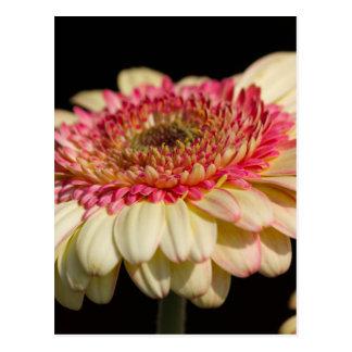 flor del aster en el jardín tarjeta postal