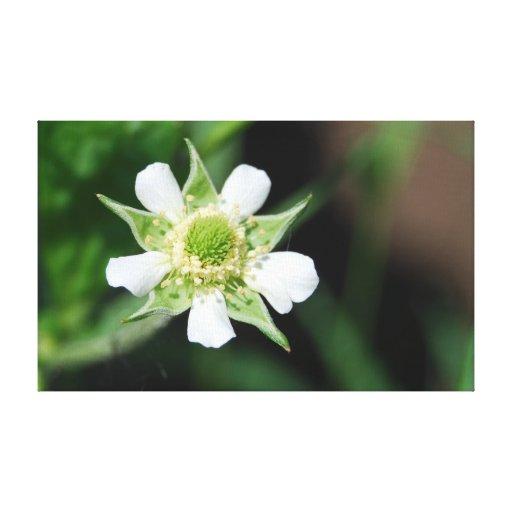Flor del Avens blanco Impresión En Tela