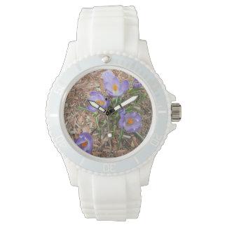 Flor del azafrán en la floración reloj