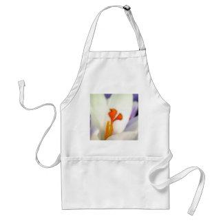 Flor del azafrán en primavera temprana delantal