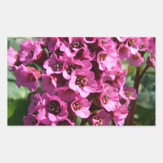 Flor del Bergenia; Ningún texto Pegatina Rectangular