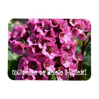 Flor del Bergenia; Personalizable Imanes Rectangulares