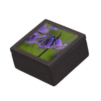 Flor del Bluebell Cajas De Joyas De Calidad