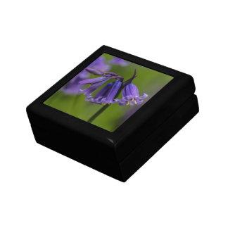 Flor del Bluebell Caja De Joyas