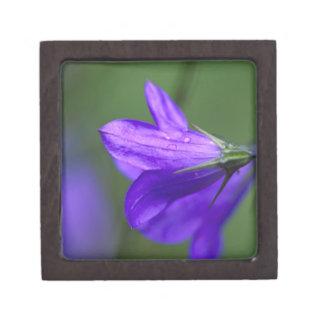 Flor del Bluebell en paso de la independencia aden Cajas De Recuerdo De Calidad