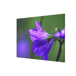 Flor del Bluebell en paso de la independencia Impresión En Lienzo