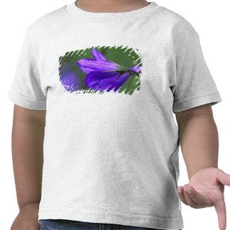 Flor del Bluebell en paso de la independencia Camiseta