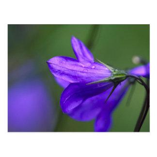 Flor del Bluebell en paso de la independencia Postales